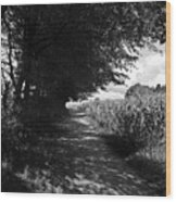 German Path Black And White Wood Print by Edward Myers