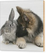 German Shepherd And Rabbit Wood Print by Mark Taylor