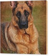 German Shepherd Dog Portrait  Wood Print by Angie Tirado