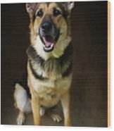 German Shepherd Dog Thor Wood Print