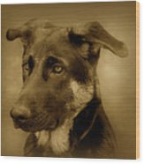 German Shepherd Pup Wood Print