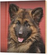 German Shepherd Puppy - Queena Wood Print