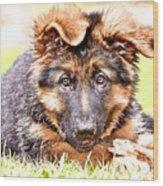 German Shepherd Puppy Wood Print