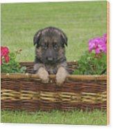 German Shepherd Puppy In Basket Wood Print by Sandy Keeton