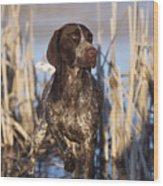 German Shorthair On Point -  D000897 Wood Print