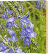 Germander Speedwell Wood Print