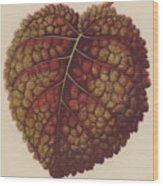 Gesnera Cinnabarina Wood Print