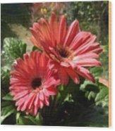 Gerberas In Coral Pink 2 Wood Print