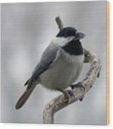 Getting Ready To Crack - Black-capped Chickadee Wood Print