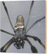 Getting To Know A Golden Orb Weaver Wood Print