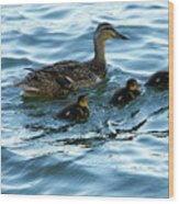 Getting Your Ducks In A Row Wood Print