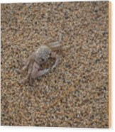 Ghost Crab Wood Print
