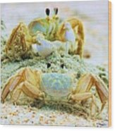 Ghost Crabs Wood Print