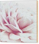 Ghost Of Roses Past Wood Print