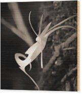 Ghost Orchid At First Light Wood Print