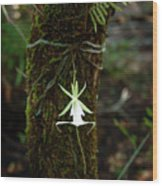 Ghost Orchid Of The Fakahatchee Strand Wood Print
