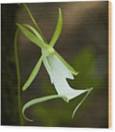 Ghost Orchid  Wood Print
