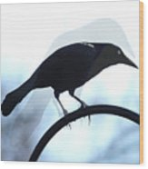 Ghosted Grackle Wood Print