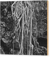 Ghostly Roots - Bw Wood Print