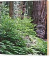 Giant Among The Forest Wood Print
