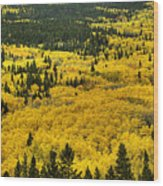 Giant Aspen Glen 2 Wood Print