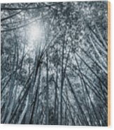 Giant Bamboo In Forest With Sunflare, Black And White Wood Print