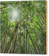 Giant Bamboo In Forest With Sunflare Wood Print