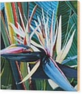 Giant Bird Of Paradise Wood Print