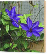 Giant Blue Clematis Wood Print