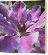 Giant Clematis Wood Print