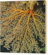 Giant Coral Polyp Wood Print