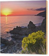 Giant Coreopsis Sunset 2 Wood Print