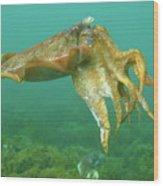 Giant Cuttlefish Wood Print