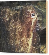 Giant Cuttlefish Camouflage Wood Print