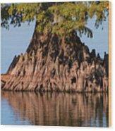 Giant Cypress Tree In Reelfoot Lake Wood Print