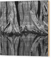 Giant Cypress Tree Trunk And Reflection 2 Wood Print