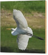 Giant Egret Grace Wood Print