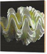 Giant Frilled Clam Seashell Tridacna Squamosa Wood Print