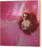 Giant Hibiscus Wood Print