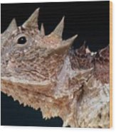 Giant Horned Lizard Wood Print