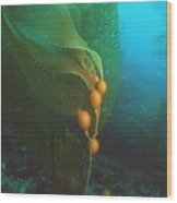 Giant Kelp Wood Print