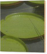 Giant Lily Pads Wood Print
