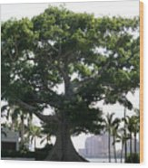 Giant Morton Fig Tree Wood Print