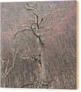 Giant Oak Tree Wood Print