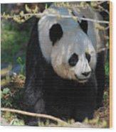 Giant Panda Bear Creeping Under A Tree Branch Wood Print