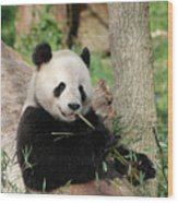 Giant Panda Bear Lounging On Against Tree Trunk Wood Print
