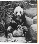 Giant Panda In Black And White Wood Print
