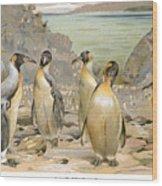 Giant Penguins, C1900 Wood Print