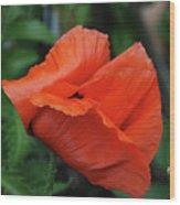 Giant Poppy-2 Wood Print