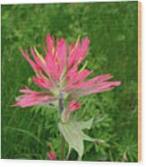 Giant Red Paintbrush Wood Print